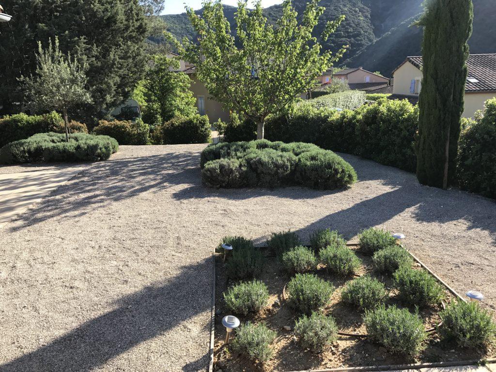 Lavendel in tuin