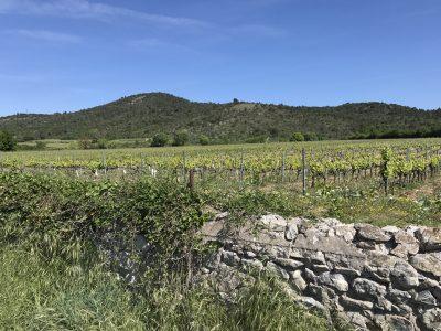 Wijngaarden bij park
